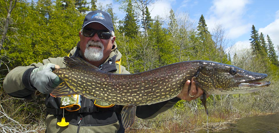 Ontario sizes records ontario fly fishing records registry for Trout fishing northern california